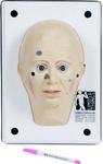 Муляж для диагностики широкого спектра поражений кожи
