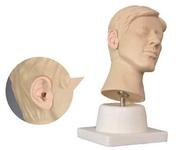 Тренажер для проведения промывания ушей