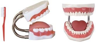 Муляж для отработки навыков лечения зубов