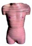 Анатомическая модель женского торса на поперечных срезах