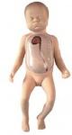 Модель для постановки центрального венозного катетера у новорожденных