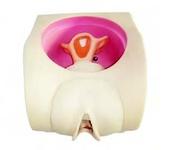 Тренажер контрацепции у женщин