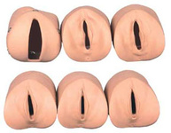 Модель предродового изменения шейки матки