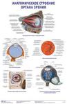 """Плакат """"Анатомическое строение органа зрения"""""""