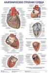 """Плакат """"Анатомическое строение сердца"""""""