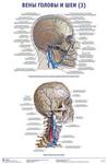 """Плакат """"Вены головы и шеи 3"""""""